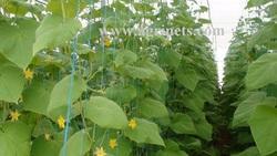 Vegetable Cultivation Net