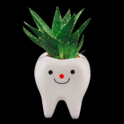 Tooth FRP Planter