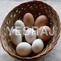 Pekin Duck Egg