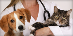 Veterinary Franchise in Rajasthan