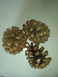 Pine Natural Dry Flowers Material