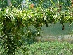 Plant Climbing Net