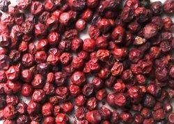 Jujube Fruit Ber Phal Suppliers Traders Amp Manufacturers