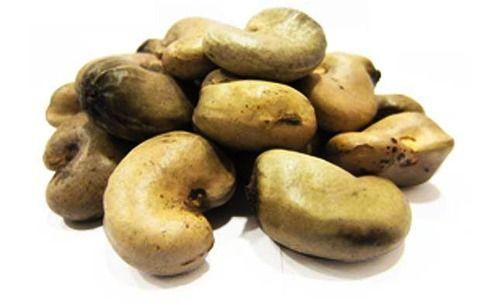 Raw Cashew Material