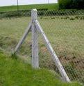 Cement Fencing Poles