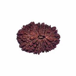 16 Mukhi Rudraksha
