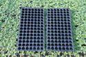 Nursery Tray / Seedling Tray