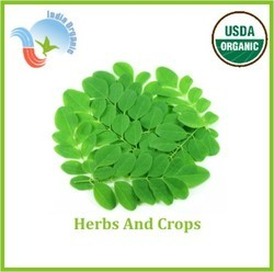 USDA Organic Moringa Powder