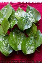 Herbal Paan