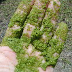 Algaecides Chemicals