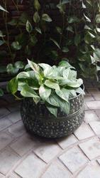 GA GFT - 1001 ( Large ) Garden Pot