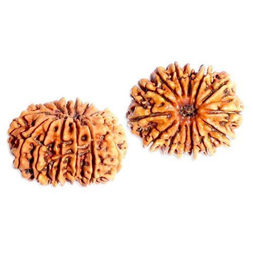 14 Mukhi Rudraksha Beads