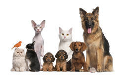 Veterinary Franchise in West Bengal