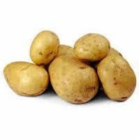 potato seed kufri jyoti