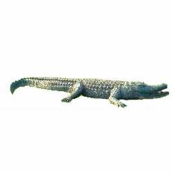 FRP Crocodile