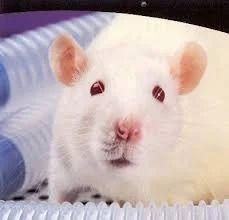 white mouse retailer from delhi