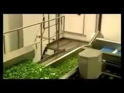 Frozen Vegetable Processing Plant Machinery