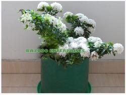 HDPE Flower Grow Bag