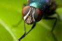Flies Treatment Services