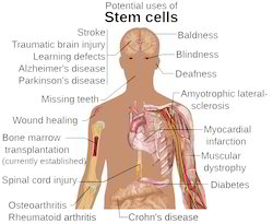 Herbal Double Stemcell Medicine