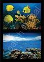 Nature's Underwater Life 3D Wallpaper