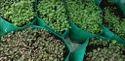 Single Plant Grow Bags