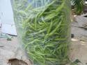SAGAR 215 F-1 Hybrid Chilli Seed
