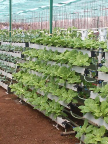 Vertical Farming Organic Farming Techxellance Solutions
