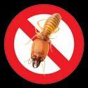 Termite Control Consultancy