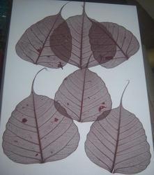 Brown Colored Skeleton Leaves