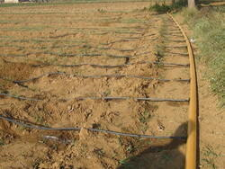 Micro Irrigation System/ Drip Irrigation On Undulated Land