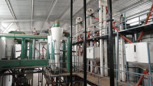 Chana Dal Plant