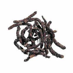 Picrorrhiza Kurroa - Kutaki