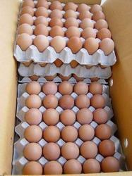 Broilers Hatching Egg