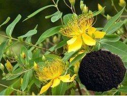 St Johns Wort Plant Extracts