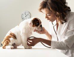 Veterinary Franchisee In Goa