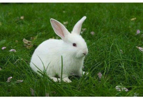 rabbits house white rabbits manufacturer from bhagalpur. Black Bedroom Furniture Sets. Home Design Ideas