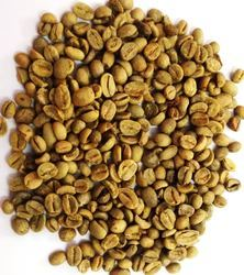 green coffee bean arabica robusta