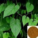 Tinospora Cordifolia Extraxct