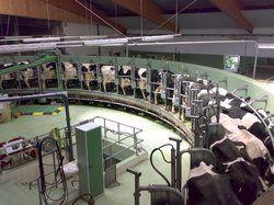 Dairy Farming Plants