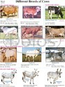 Animal Husbandry Charts