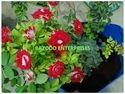 Rose Plant Grow Bag