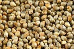 Indian Green Bajra (Pearl Millet)