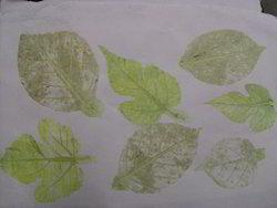 Leaf Impression Handmade Papers Made From Cotton Rag Fiber