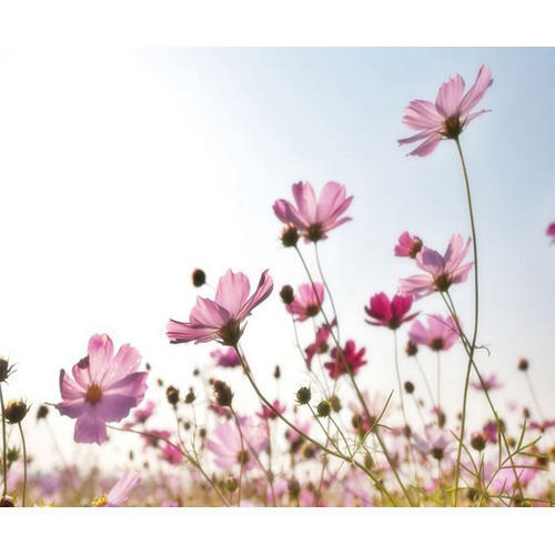 floral wallpaper walls flowering plants wilderness - Flower Wallpaper For Walls