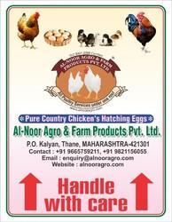 PURE COUNTRY CHICKENS HATCHING EGGS