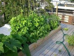 rooftop organic farming service provider