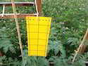 Fly Yellow Sticky Trap 8 X 6 inch