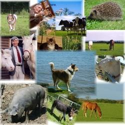 Veterinary Franchise in Delhi