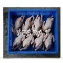 Fresh Frozen Poultry Meat